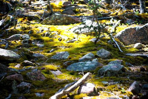 Sea-of-moss